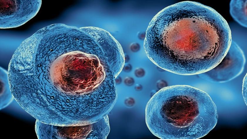 SGK Kök Hücre Tedavisini Karşılıyor mu? PRP Ücretleri (GÜNCEL)