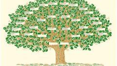 Soy Ağacı Nasıl Bulunur? E-Devlet Al Üst Soy Bilgisi Sorgulama